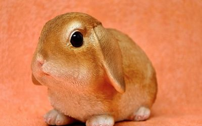 Lapin, carottes, choudel !
